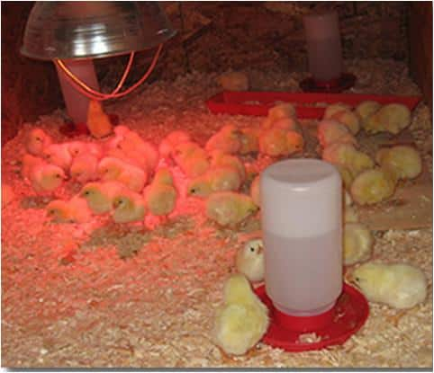 A List of poultry farming equipment and their uses