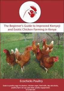 Poultry farming in Kenya