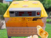 112 eggs incubator